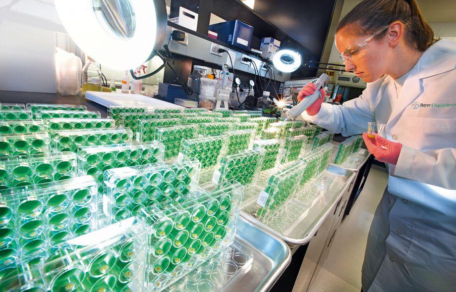 Bayer crop science работа
